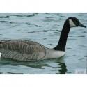 Blason Animalier LCC birdy canard européen