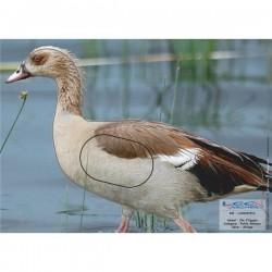 Blason Animalier LCC birdy oie