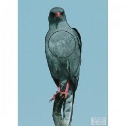 Blason Animalier LCC birdy faisan