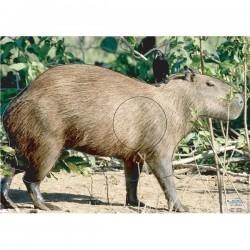 Blason Animalier LCC  PG capybara 2