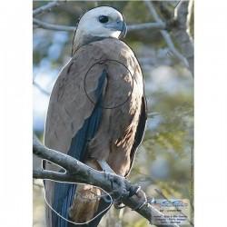 Blason Animalier LCC birdy buse
