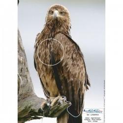 Blason Animalier LCC birdy aigle