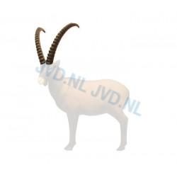 SRT Corne ibex