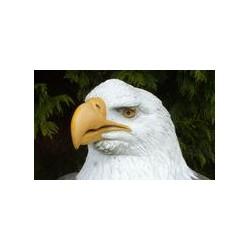 Natur Foam L'Aigle à tête blanche