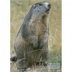 Blason Animalier LCC birdy marmotte