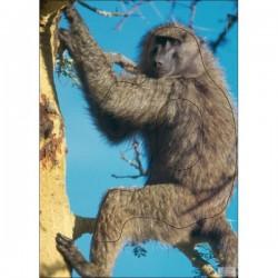 Blason Animalier LCC  PG baboin